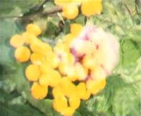 flower1H200
